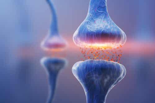 Tipos de sinapsis: la comunicación neuronal