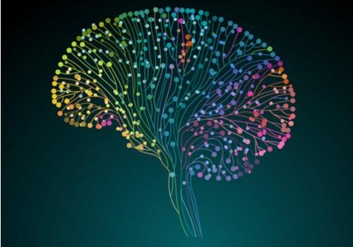 El Proyecto Conectoma Humano: descubriendo nuestro cerebro a fondo