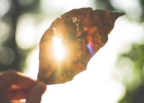 hoja con luz representando el acto de echar de menos