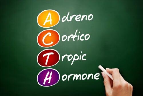 Hormona adrenocorticotropa