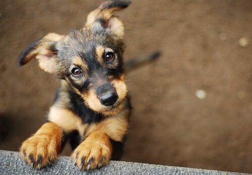 Mascotas rescatadas, ¿cómo elegir a tu mejor amigo?