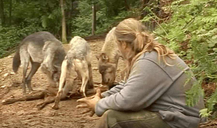Shaun Ellis con lobos