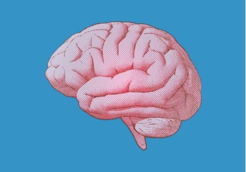 Los núcleos del rafe: características y función
