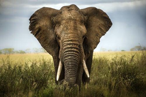Los seis sabios ciegos y el elefante: un cuento para valorar las opiniones de los demás