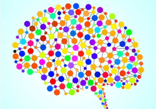 Las 97 zonas del cerebro que no conocemos