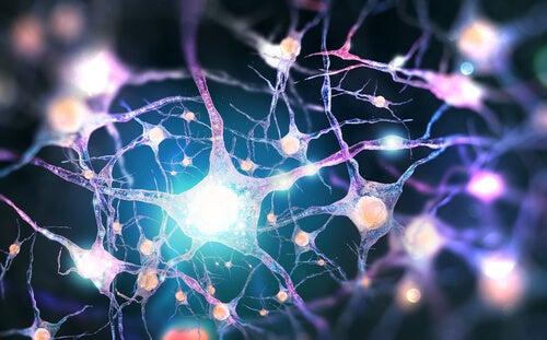 Dinorfinas: neurotransmisores opioides endógenos