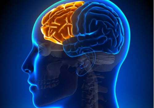Síndrome disejecutivo: cuando falla el lóbulo frontal