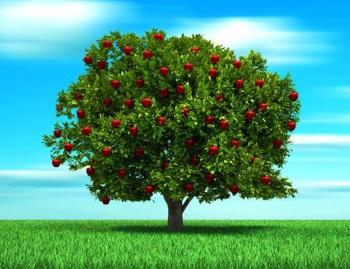 La parábola del árbol, una historia sobre el amor de un padre