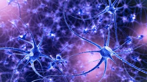 Neuronas para representar la plasticidad neuronal