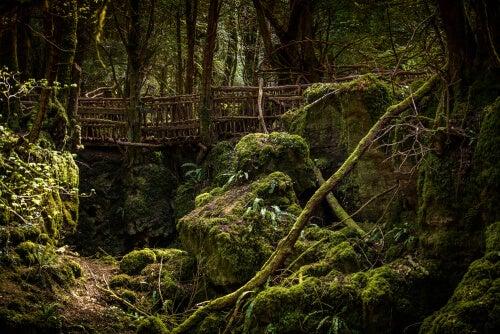 Bosque con un puente