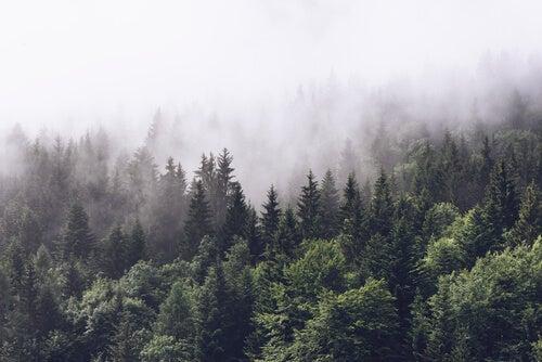 Montañas y árboles