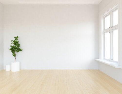 Planta en una habitación vacía para representar la zona blanca del hogar