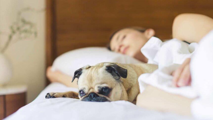 Chica con su perro representando el dormir con nuestras mascotas