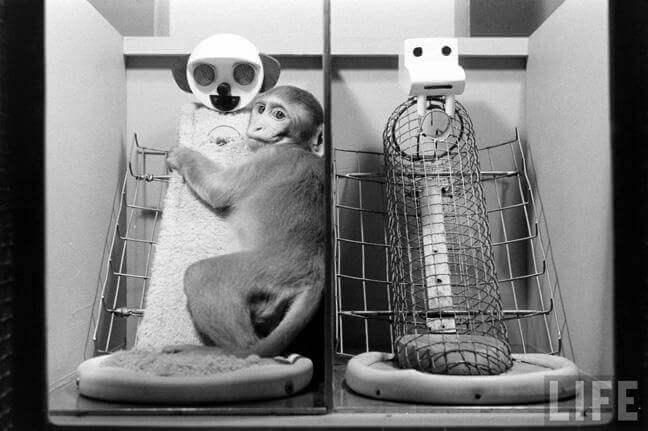 Mono agarrado a una muñeca