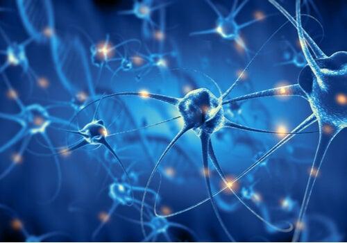 Psicobiología: características y ramas