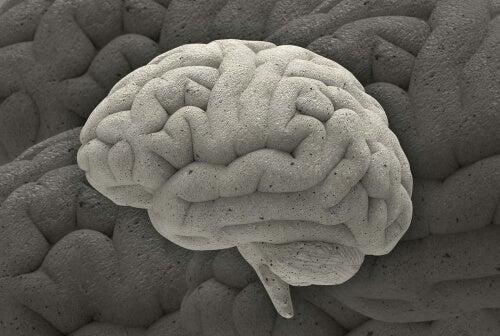 Cerebro de piedra simbolizando la adversidad crónica
