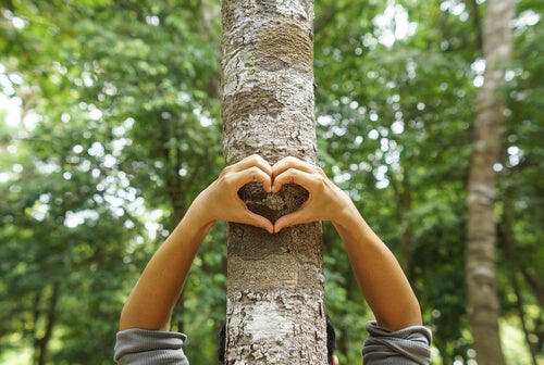 Manos haciendo un corazón sobre un árbol