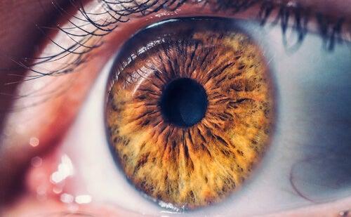 Optografía: la macabra ciencia del siglo XIX