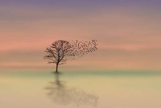 Árbol con pájaros