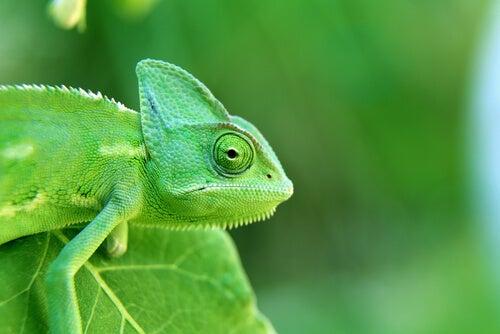 Los experimentos de Chartrand y Bargh y el efecto camaleón