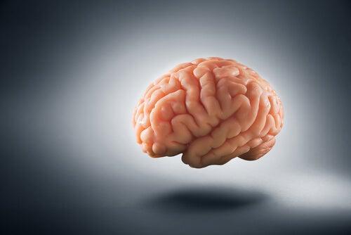 Cerebro sobre fondo gris