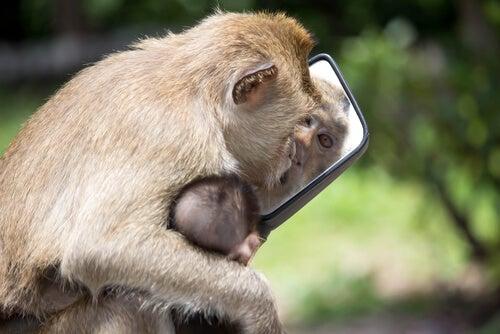 Mono con un espejo