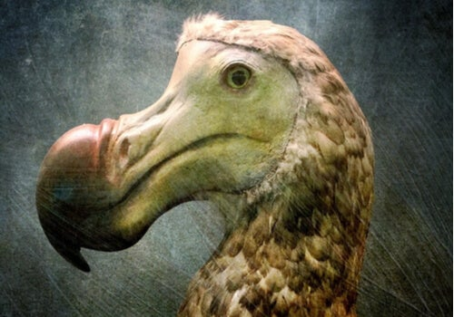 La teoría del pájaro Dodo en psicología