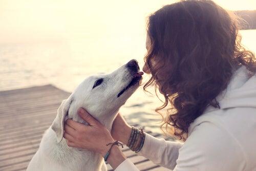 Lo que hay en el corazón de un perro cuando ve a su dueño