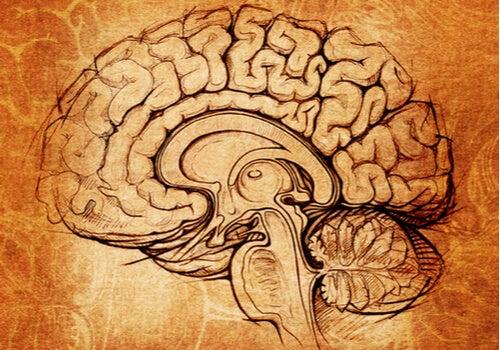 Núcleo lenticular, el centro de la motivación y el aprendizaje