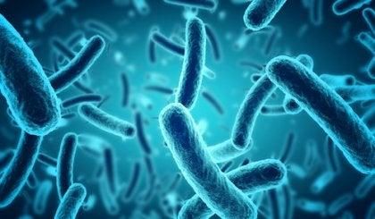 Probióticos en el tratamiento de la depresión y la ansiedad