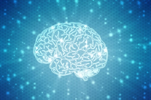 Los interesantes experimentos de Marian Diamond sobre plasticidad cerebral