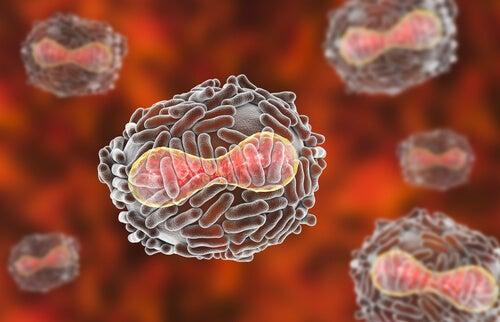 Virus de la variola