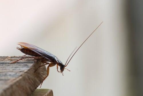 Katsaridafobia o miedo a las cucarachas