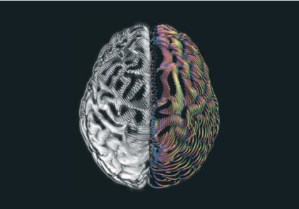 Los sorprendentes hallazgos en personas que tienen solo medio cerebro