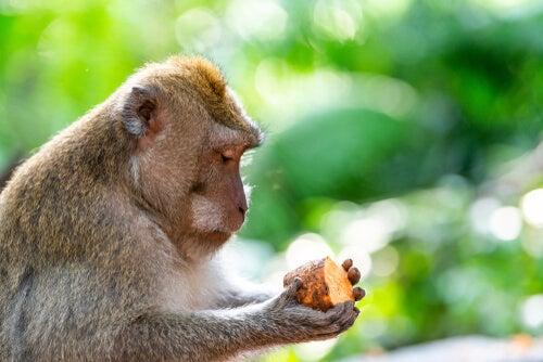 Mono con una patata