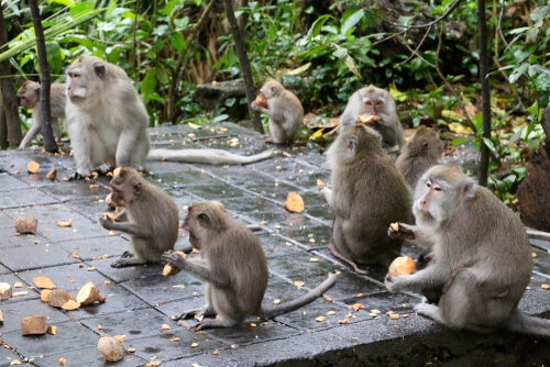 El efecto del centésimo mono