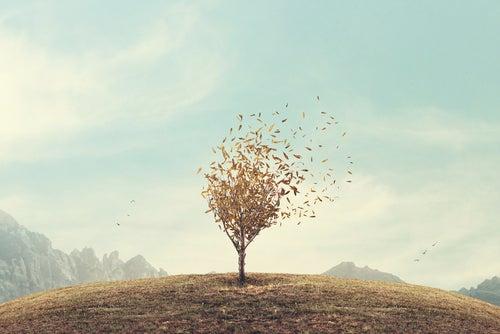 Árbol en mitad del campo