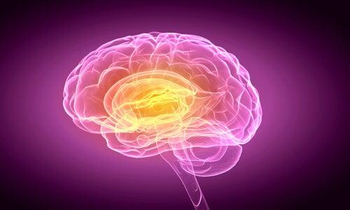 El cerebro también late
