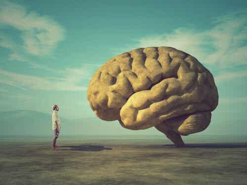 ¿Por qué el cerebro es arrugado?