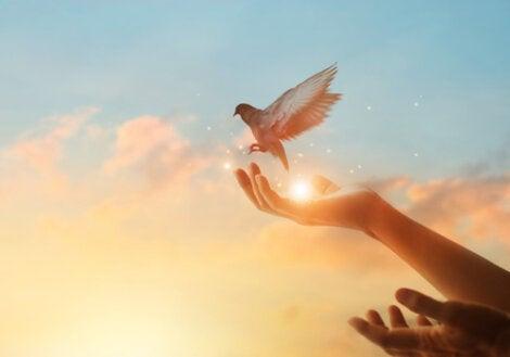 Manos con una paloma para representar cómo alcanzar la felicidad en tiempos difíciles