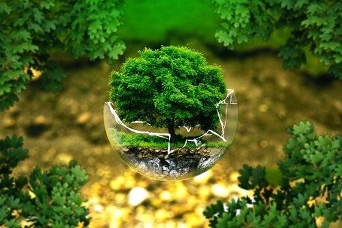 Bola con árbol