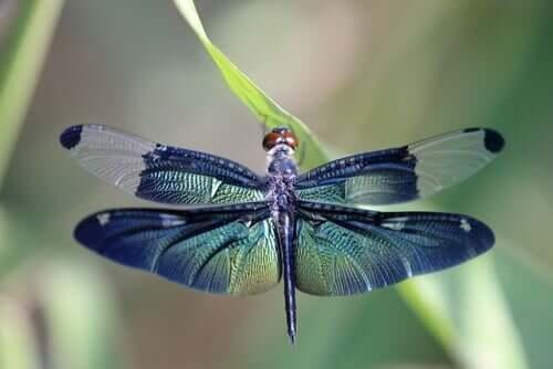La bella metáfora de la libélula y los ciclos de la vida