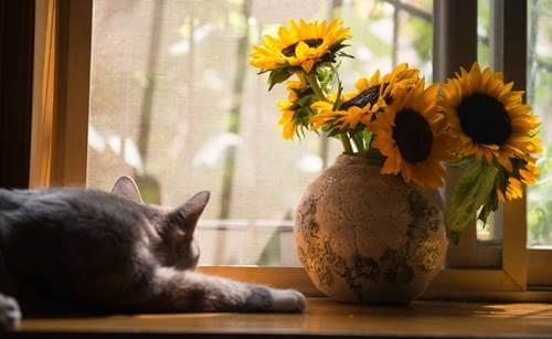 Gato ante ventana sintiendo Miedo, tristeza y frustración