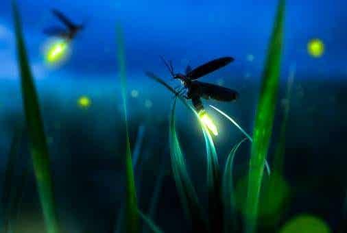 La metáfora de la luciérnaga: ser luz en la oscuridad
