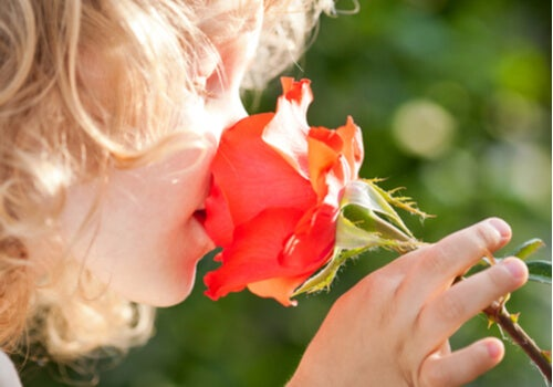 Niña oliendo una rosa
