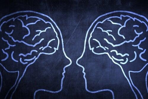 El cerebro social: ¿por qué es una ventaja evolutiva?