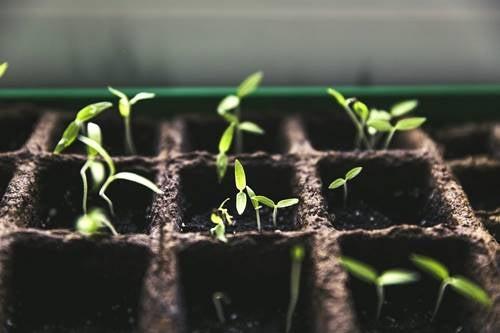 Cultivar un huerto en casa, más que una moda