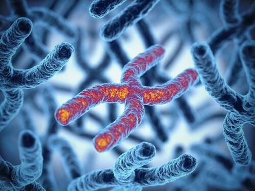 Cromosoma X