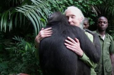 Jane Goodall, de aficionada a referente mundial
