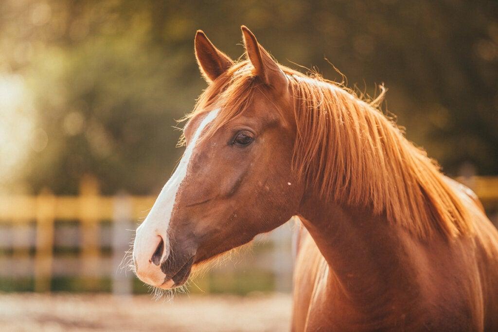 Miedo a los caballos o hipofobia